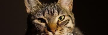 Animales Animales Un clérigo saudí prohíbe a sus súbditos hacerse 'selfies' con gatos