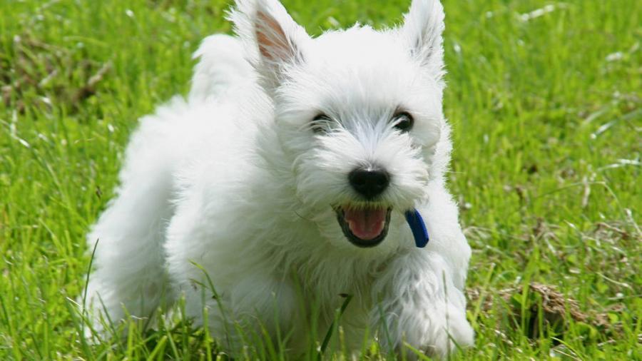Animales Animales 5 razas de perros para espacios pequeños